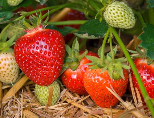 Belchim Crop Protection acquires Proagro GmbH